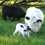 Environmental Benefits of Grass-fed Beef