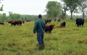 Wisconsin Grass-fed Beef Cooperative Managed Grazing